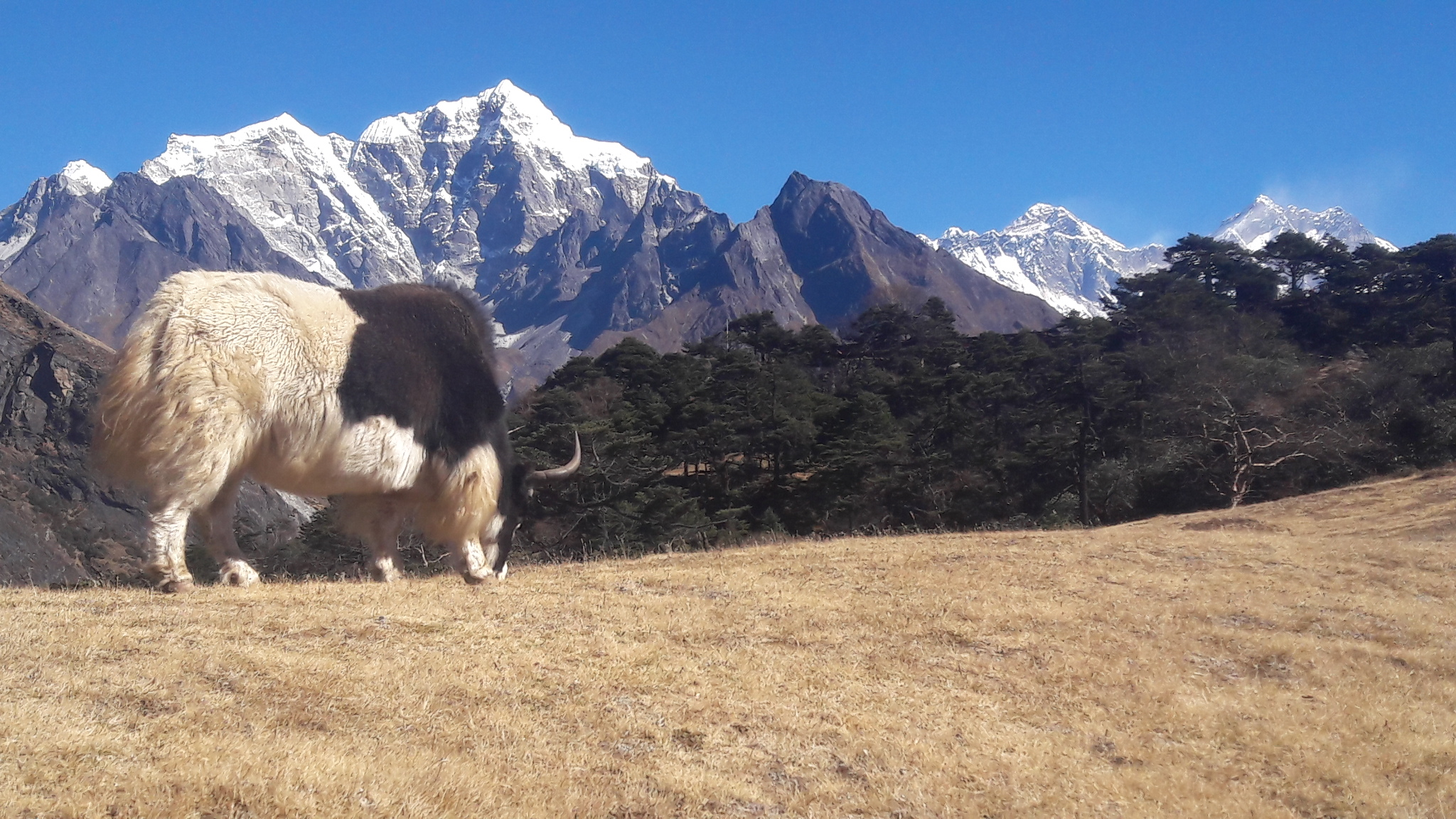 Top 3 Nepal Vacation Packages 2020